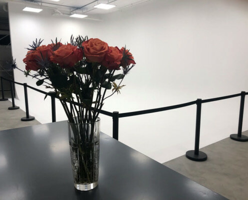 Flowers in front of cyclorama wall
